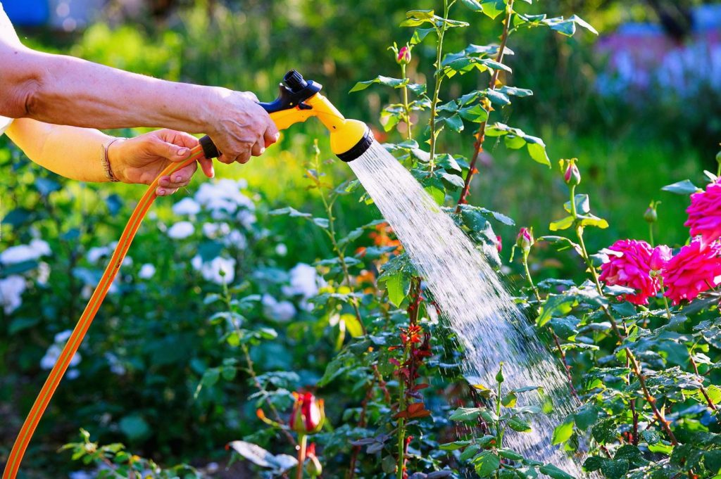 Water saving ideas for your garden starts with watering plants less. While important, plants only need 2 gallons per week.
