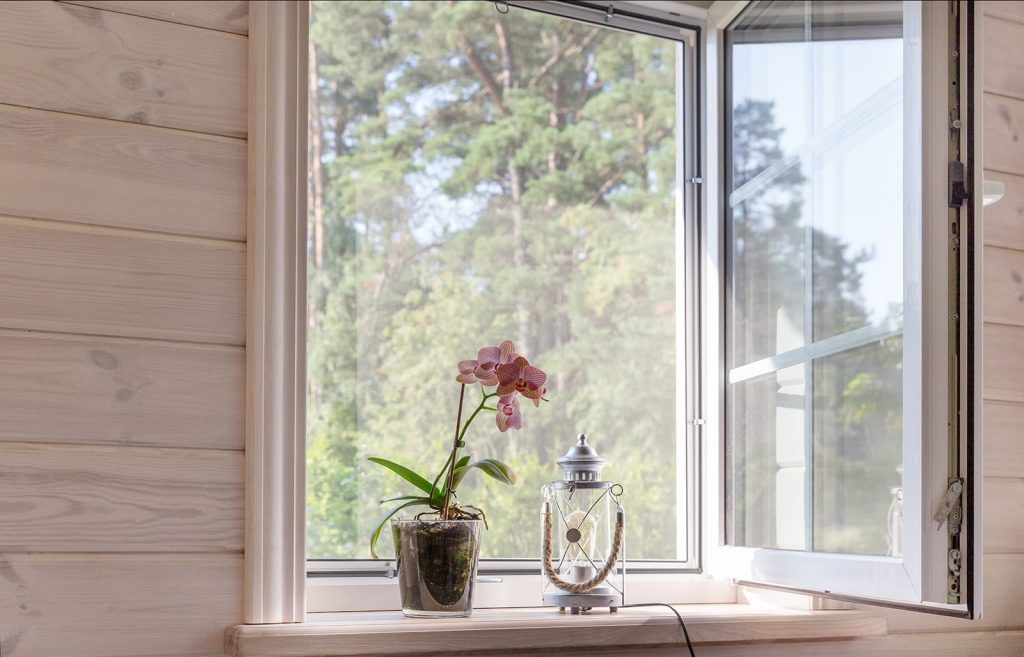 A potted flower sits near a screen window